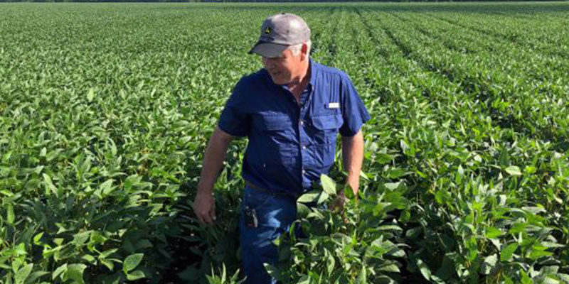 Soybean and pea farmers scramble as China and European trade missions cancel visits