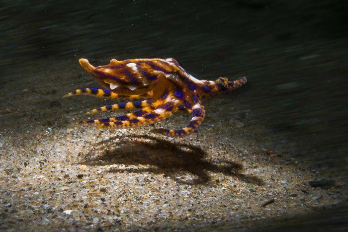 Photographer discovers beauty of night time miniature marine world