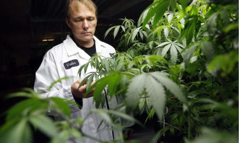 Canopy Growth CEO: We're not the Amazon or Google of pot yet, but we want to be