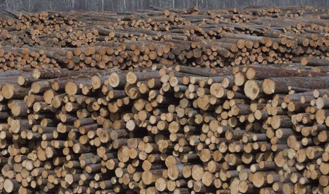 Forestry co. stocks tumble