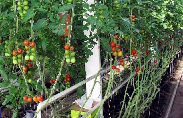 Organic: worth it?