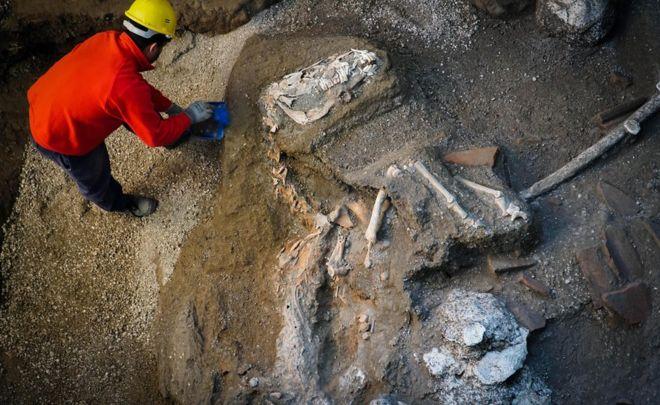 Pompeii horse found still wearing harness