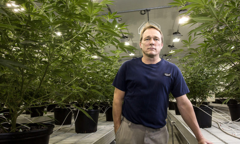 Canopy Growth's stock jumps as Piper Jaffray raises price target by 50%