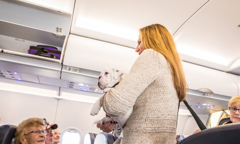 United Airlines: No more puppies on its planes