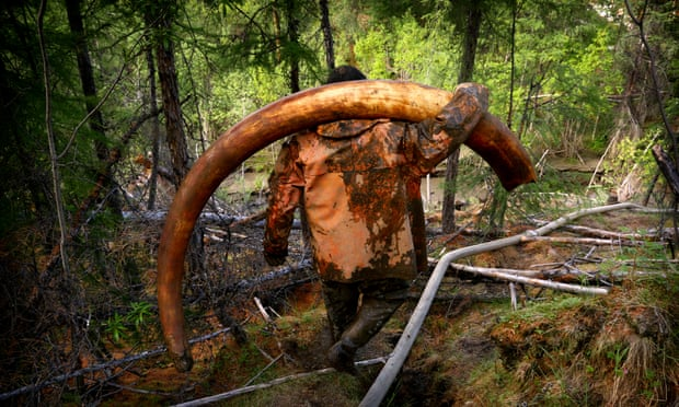 Permafrost thaw sparks fear of 'gold rush' for mammoth ivory