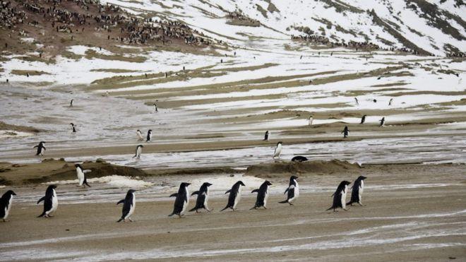 Antarctic island hits record temperature of 20.75C