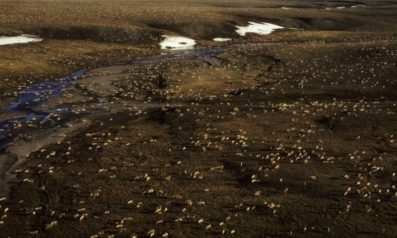 Biden Plans Temporary Halt of Oil Activity in Arctic Refuge