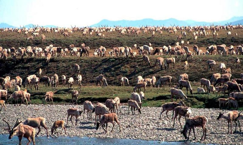 US Holds First Oil Lease Sale for Alaska's Arctic Refuge