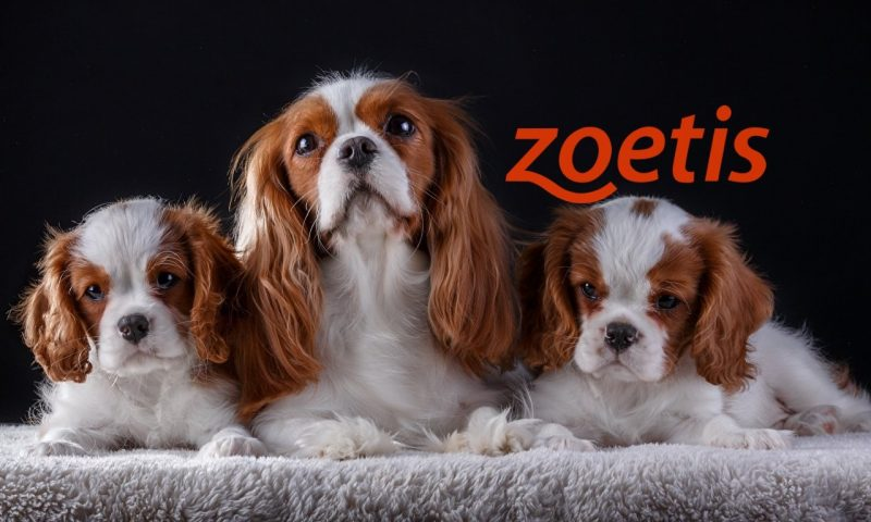 Zoetis Inc Cl A (ZTS) gains 1.16%
