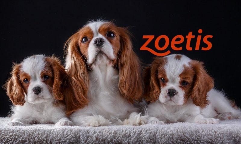 Zoetis Inc Cl A (ZTS) gains 0.28%