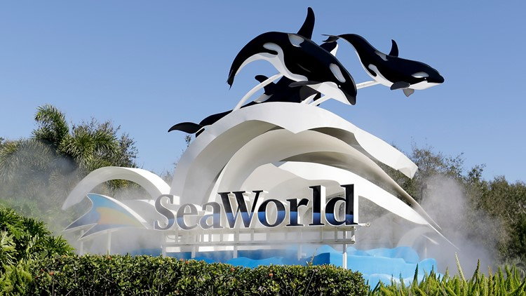 SeaWorld posts narrower-than-expected Q1 loss as revenue tops estimates
