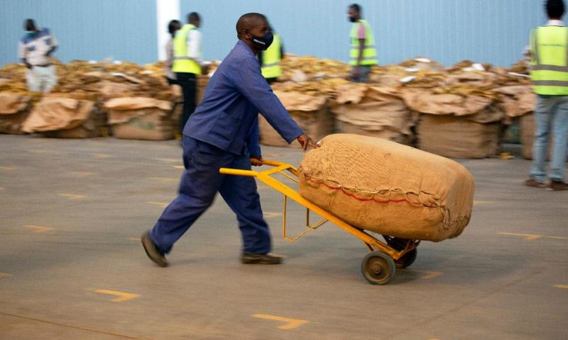 Zimbabwe's Tobacco Booms, but Black Growers Complain of Debt